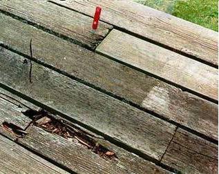 Деструкция древесины